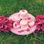 blossom-macarons-3d