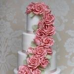Pink Rose Cascade 5